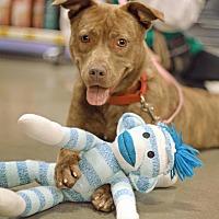 Adopt A Pet :: Wendy - Marietta, GA