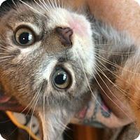 Adopt A Pet :: Fiona - Hazlet, NJ