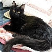 Adopt A Pet :: Juju - Cleveland, OH