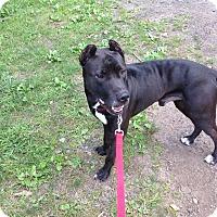 Adopt A Pet :: monti - Wanaque, NJ