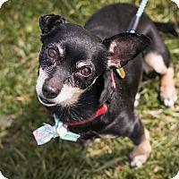 Adopt A Pet :: Millie - Syracuse, NY