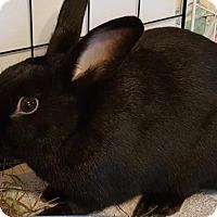Adopt A Pet :: Pepper - Conshohocken, PA