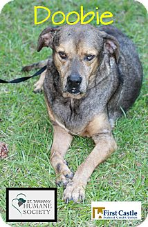 Catahoula Leopard Dog Mix Dog for adoption in Covington, Louisiana - Doobie