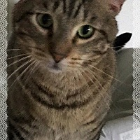 Adopt A Pet :: Rugby - Stanwood, WA