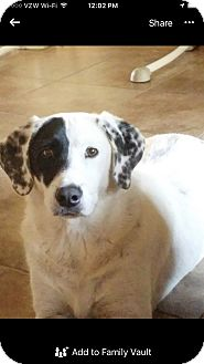 Golden Retriever/Labrador Retriever Mix Dog for adoption in Mesa, Arizona - Lucky