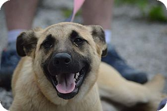 German Shepherd Dog Mix Dog for adoption in Rockwood, Tennessee - JOLENE