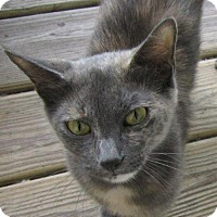 Adopt A Pet :: Louisa May - Seminole, FL