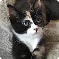 Adopt A Pet :: Merlot - North Highlands, CA