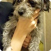 Adopt A Pet :: Dublin-ADOPTION PENDING - Boulder, CO