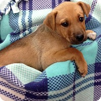 Adopt A Pet :: #2 Sundance - Colton, CA
