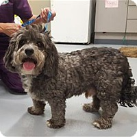 Adopt A Pet :: Teddy - Howell, MI