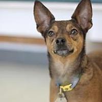 Adopt A Pet :: Pecan - Yukon, OK