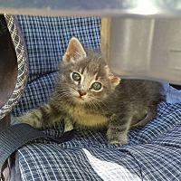 Adopt A Pet :: Darby - New Richmond,, WI
