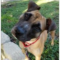 Adopt A Pet :: Claire - Austin, TX