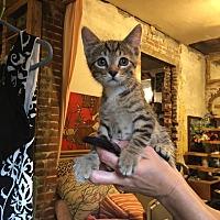 Adopt A Pet :: Lanier - St. Louis, MO