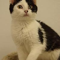Adopt A Pet :: Thorin - DFW Metroplex, TX