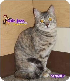 Domestic Shorthair Kitten for adoption in Cedar Creek, Texas - Annie