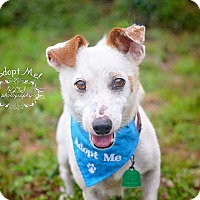 Adopt A Pet :: Jack (2) - Fort Valley, GA