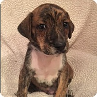 Adopt A Pet :: Rudy - Lewisville, IN