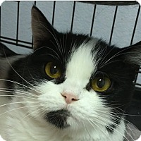 Adopt A Pet :: Paris - Winchester, CA