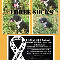 Border Collie Mix Dog for adoption in Hearne, Texas - Three Socks