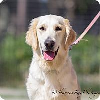 Adopt A Pet :: Latte - Vacaville, CA