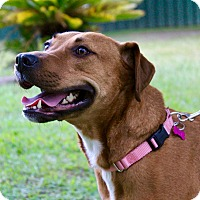 Adopt A Pet :: Lily - Pawling, NY