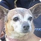 Adopt A Pet :: Ethel