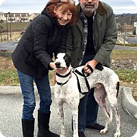 Adopt A Pet :: Princeton - Knoxville, TN