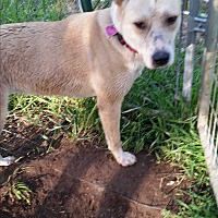 Adopt A Pet :: Daisy - Kingsland, TX