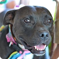 Pit Bull Terrier Mix Dog for adoption in Montgomery, Texas - Smiley