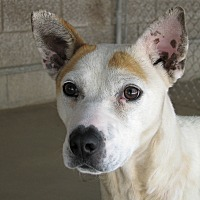 Adopt A Pet :: Liv - Ruidoso, NM