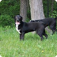 Adopt A Pet :: Star - Sparta, NJ