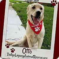 Adopt A Pet :: OTTO - Lincoln, NE
