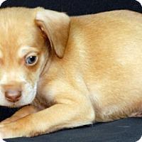 Adopt A Pet :: George - Newland, NC