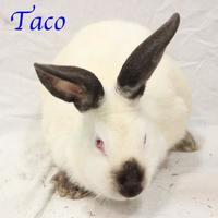 Adopt A Pet :: Taco - Bradenton, FL
