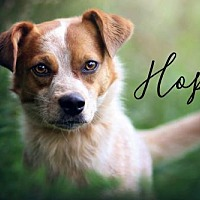 Adopt A Pet :: Hope - Joliet, IL