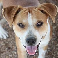 Adopt A Pet :: Anker - Mahwah, NJ