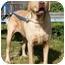 Photo 2 - Labrador Retriever Mix Dog for adoption in San Diego, California - JAX