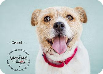 Terrier (Unknown Type, Medium) Mix Dog for adoption in Phoenix, Arizona - Gretel
