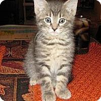 Adopt A Pet :: Nod - Dallas, TX