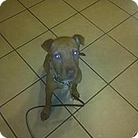 Adopt A Pet :: Lootah - Roaring Spring, PA