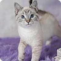 Adopt A Pet :: Mabel - Eagan, MN