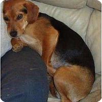 Adopt A Pet :: Lacy - Irvington, KY
