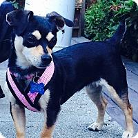 Adopt A Pet :: Delelia - Adoption Pending - Gig Harbor, WA