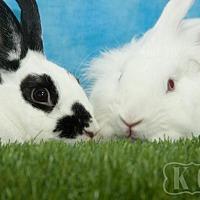 Adopt A Pet :: Leonard, Opal - Pflugerville, TX