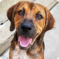 Adopt A Pet :: Sally*ADOPTED!!* - Chicago, IL