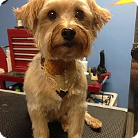 Adopt A Pet :: Bobbie Jo - Mount Gretna, PA