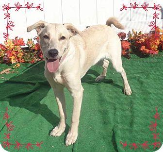 Labrador Retriever Mix Dog for adoption in Marietta, Georgia - UTLEY