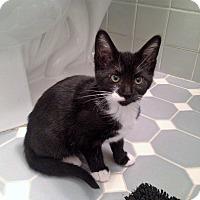 Adopt A Pet :: Perdita - River Edge, NJ